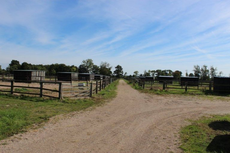 Professional Equestrian Property
