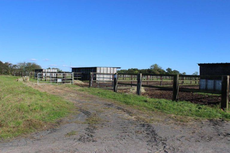 D39AEC1D B1A7 4B55 A90A A6A28A549643 Professional Equestrian Property
