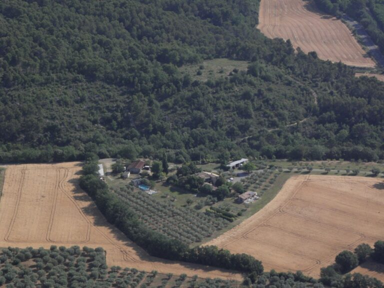 Olive farm in Provence