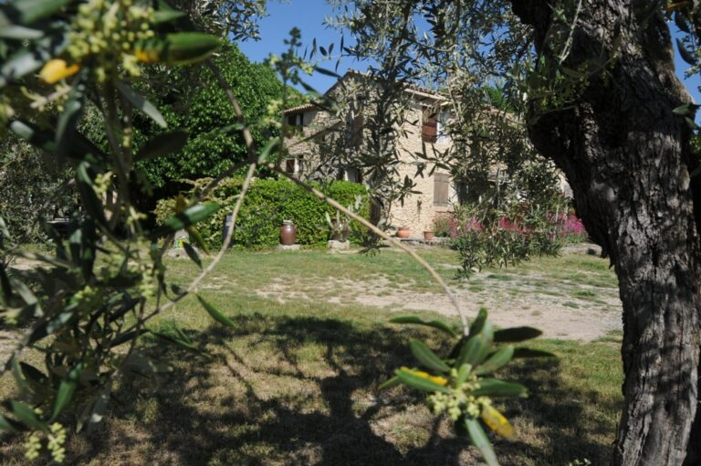DSC 6241 Olive farm in Provence