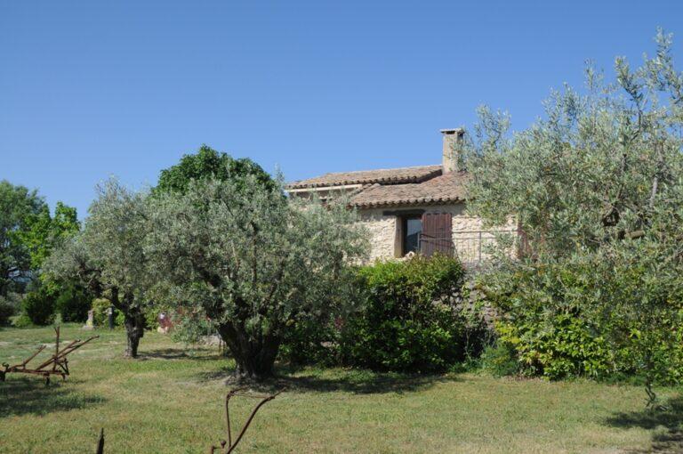 DSC 6243 Olive farm in Provence