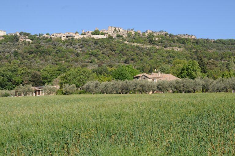 DSC 7201 Olive farm in Provence