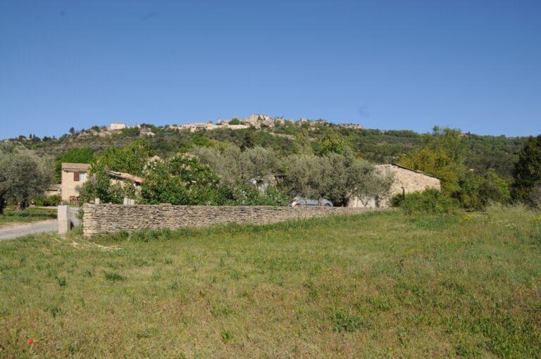 DSC 7206 Olive farm in Provence