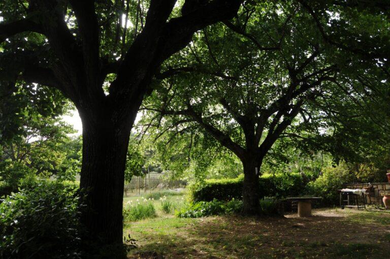 Photo 037 Olive farm in Provence
