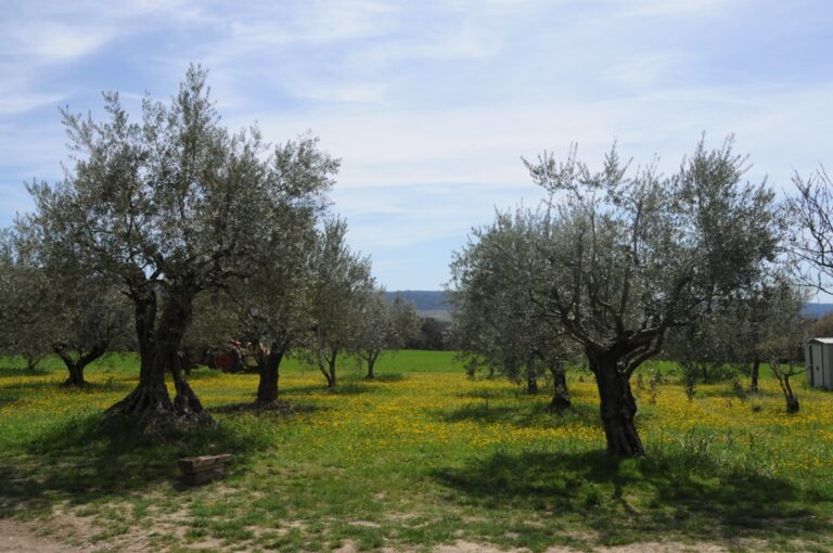 famille 051 Olive farm in Provence