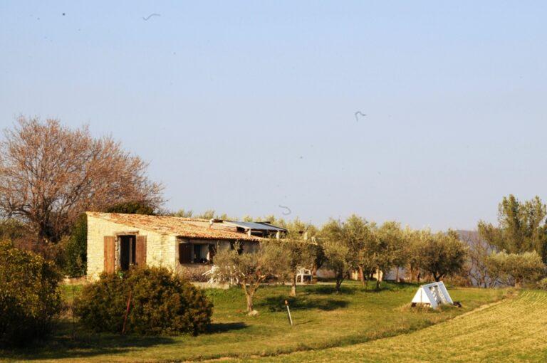 gite Olive farm in Provence