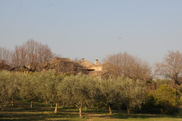 maison Olive farm in Provence